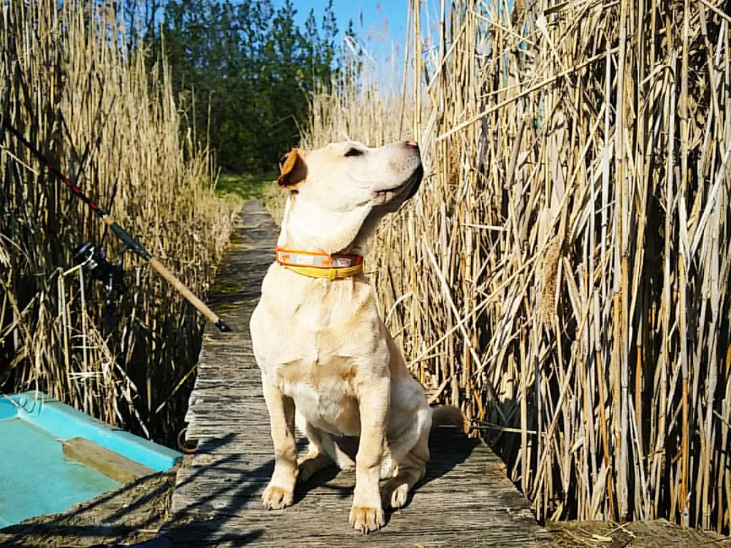 🌞Napfürdő🌞😊😍😎🎣 #zora #mizoránk #sharpull #szelidito #fishing #fishingdog #mixpuppy #instapuppy #instadog #nature #instanature #spring #friday #model #enjoy 🌞:fishi