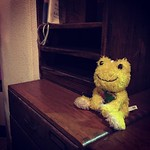 まるで店の置物になっている、からし。 #からし #musterd #黄色