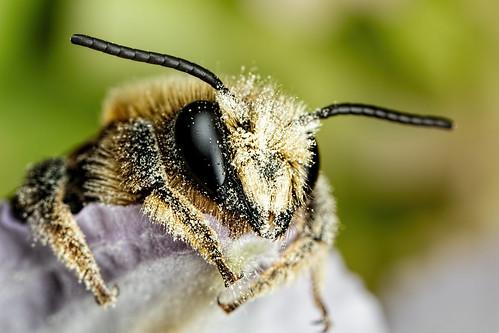 Mason Bee Series 2-1