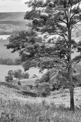bw barn newcastle landscape virginia us unitedstates framing hallroad jeffersonnationalforest jeepride honeylocusttree tamron18270 canon70d