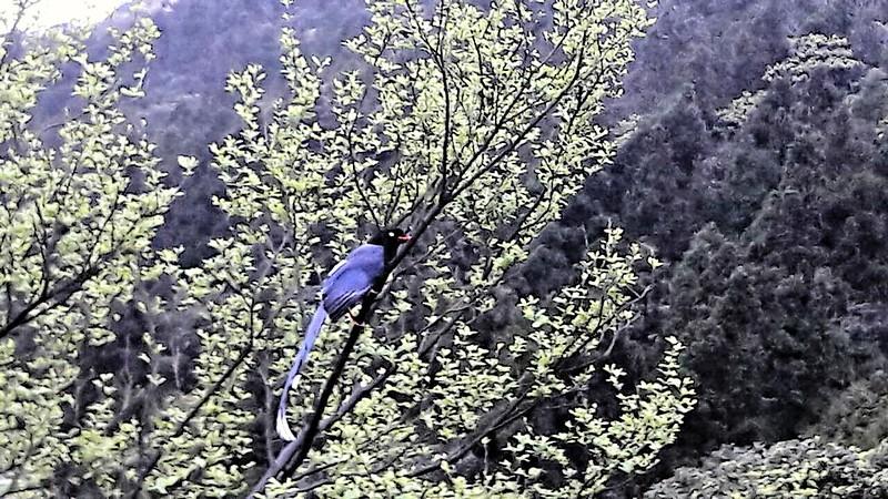 冷水坑鳥 (1)