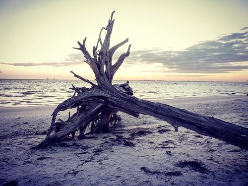 ocean sea tree beach clouds sunrise sand florida falling nikoncoolpixp510