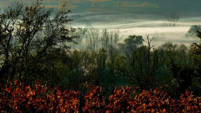 Vignoble de Cognac - Cognac vineyards - [Explore]
