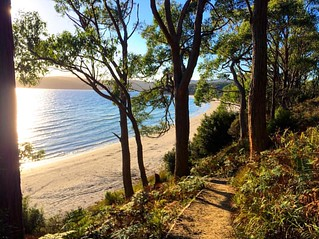 The path to the beach - the sand on these Bruny Island beaches is stunningly white! #michfrost | by UpSticksNGo