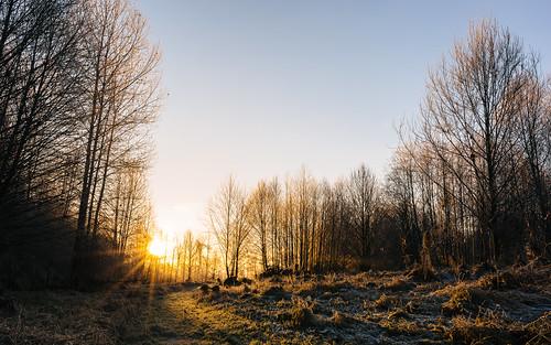 sunrise nature trees path morning carnation chinookbendnaturalarea pacificnorthwest canoneos5dmarkiii sigma35mmf14dghsmart johnwestrock washington wallpaper background