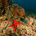 Extended dive of Marina del Este