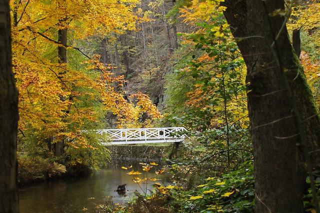 Brücke im Wald - white bridge in the woods