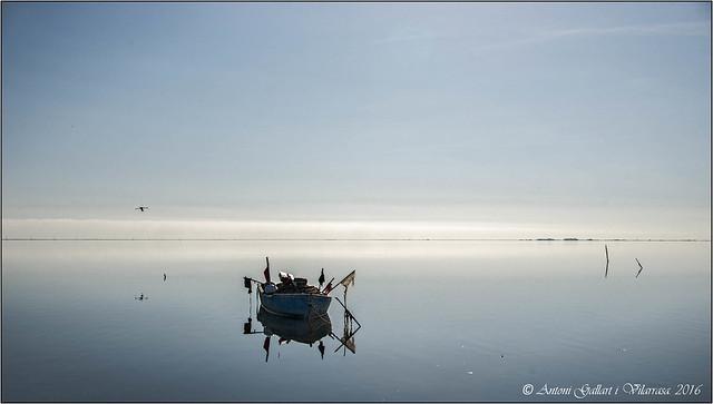 Avui el pescador no treballa perquè ha estat pare ...  (Delta de l'Ebre - Catalunya)