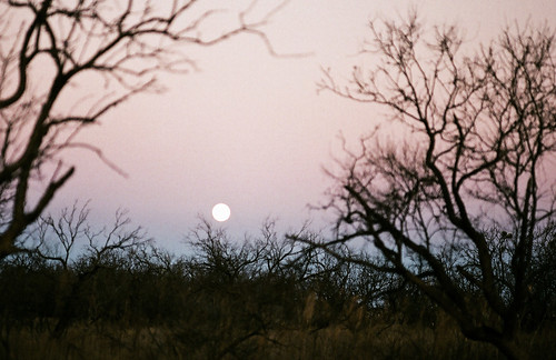 texas moonrise
