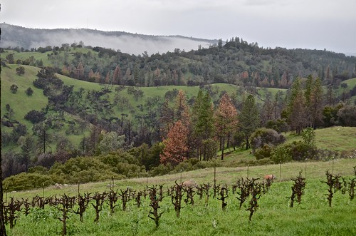 pink music clouds wine vineyards winetasting amadorcounty barreltasting cosumnesriver storywineryview