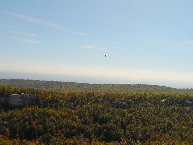 Hawk over Minnewaska hills in fall