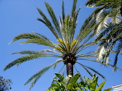 This obviously is a Palm tree, again