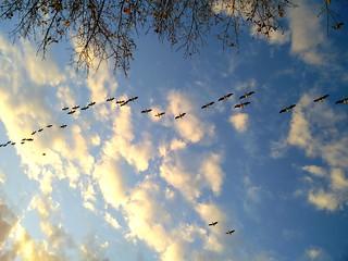 Florida sky | by The HungryCoder