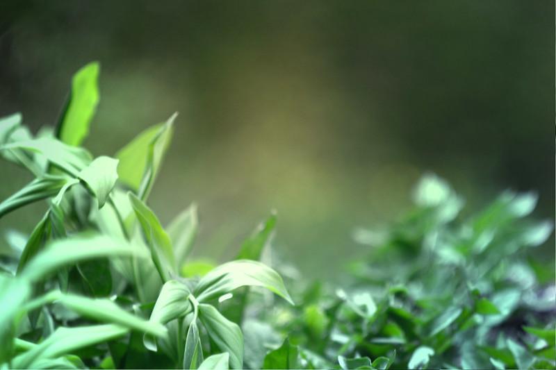 blur-dreamy-texture-texturepalace-53
