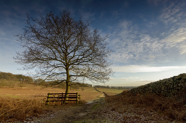 Tree & Wall