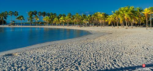 beach nature sunrise landscape outdoors florida sony palmtrees tropical fullframe fx atlanticocean coralgables waterscape mathesonhammockpark southeastflorida a7r2 ilce7rm2 sonya7r2 zeissfe2870mmf3556oss