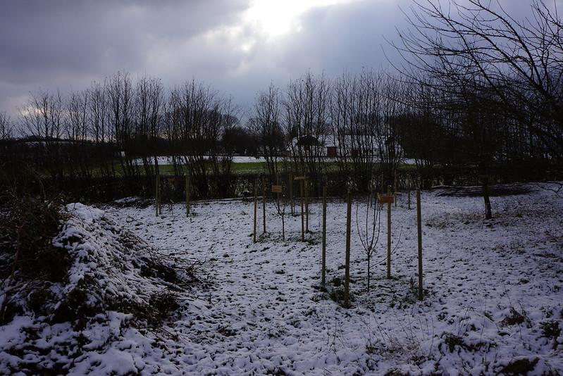 Tjørnbjerg-januar2014-01
