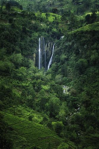 landscape srilanka teaplantation centralprovince ramboda rambodafalls canoneos6d