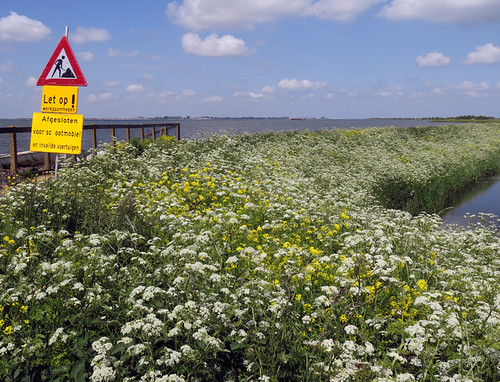 Wild flowers in bloom at the Marken Dyke in Holland