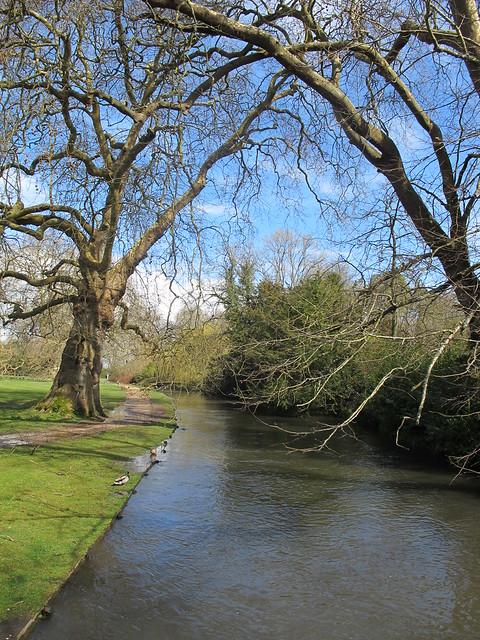 Test River, within Mottisfont Abbey Gardens SWC Walk 58 Mottisfont and Dunbridge to Romsey taken by Karen C.