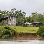 """El paisaje norte del proyecto IAPA está conformado por la triple frontera amazónica existente entre Colombia, Ecuador y Perú. Este paisaje abarca el área protegida colombiana """"Parque Nacional La Paya"""", el área protegida ecuatoriana """"Reserva de Producción Faunística Cuyabeno"""" y las áreas protegidas Peruanas """"Parque Nacional Güeppí-Sekime"""", """"Reserva Comunal Airo Pai"""" y """"Reserva Comunal Huimeki"""".   Este álbum contiene fotografías de todas estas áreas protegidas, su diversidad biológica, paisajes, poblaciones existentes y actores relacionados.  El proyecto de Integración de las Áreas Protegidas del Bioma Amazónico (IAPA), en el marco de Visión Amazónica, financiado por Unión Europea y coordinado por FAO, pretende unir esfuerzos en torno a las áreas protegidas amazónicas. En este proyecto, UICN-Sur lidera el componente de gobernanza y en asociación con WWF el de efectividad de manejo."""