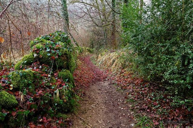 Winter Trail - Sentier d'hiver