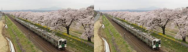 Hitome-Senbon-Zakura and Tohoku Line, 4K UHD, stereo parallel view