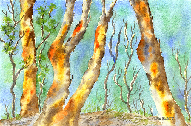 Australian Eucalyptus Forest - Watercolour - (Explored #161 - 23/03/2016)