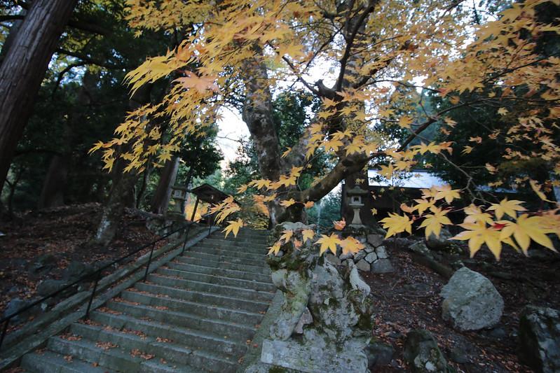 20141122-武奈ヶ岳&京都ライトアップ-0067.jpg