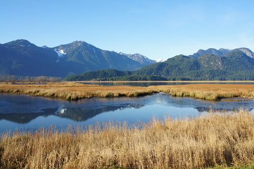 canada bc marsh pittlake