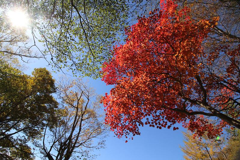2014-10-12_00125_男体山.jpg