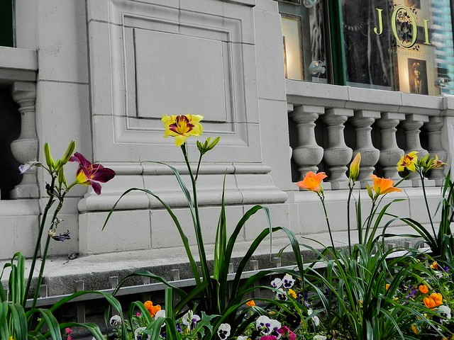 Sidewalk Garden Chicago