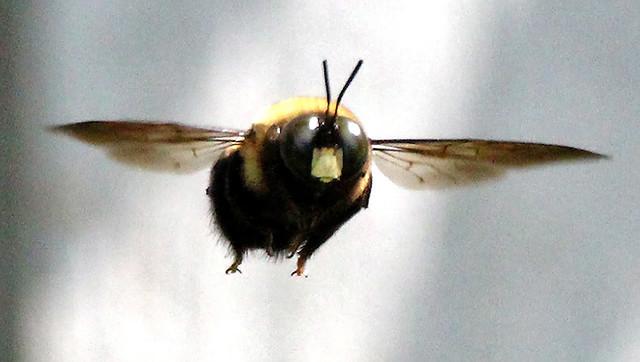 Bee-manual focus