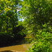 Pecatonica River Woods