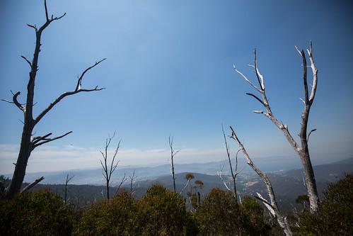 trees landscape view lookout tasmania hobart mtwellington kunanyi