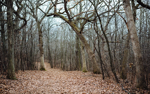 trees forest nature path winter minookapark newberlin wisconsin midwest canoneos5dmarkiii christmas2015 canonef2470mmf28lusm