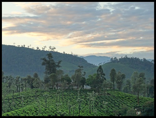 morning sky sun india nature sunrise dawn december tea earlymorning tamilnadu teaestate 2016 2015 valparai indianature coimbatoredistrict anamalais indiragandhiwildlifesanctuary anamallais