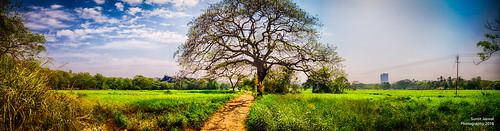 blue tree skies greenery mumbai hdr 1750mmf28 aareycolony nikond7000