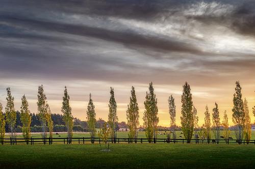 sunset tree field grass 35mm cow farm sony australia nsw berrima bendooleyestate a7rii