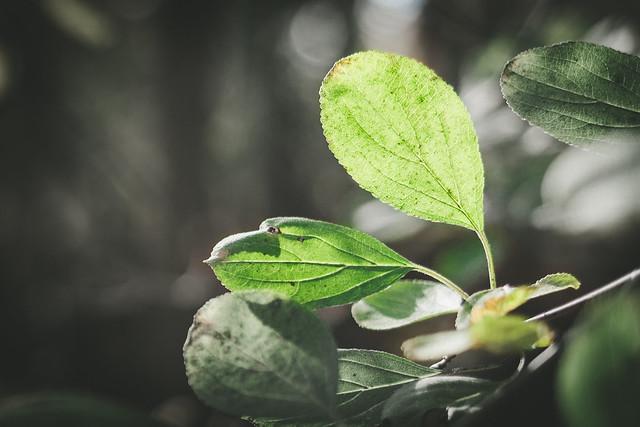 Leaf Turn