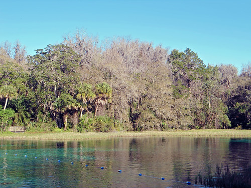trees water forest river landscape woods scenery florida palmtrees dunnellon