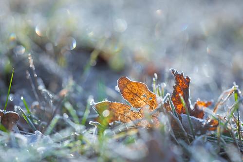 Frozen Leaf | by Jannik Peters