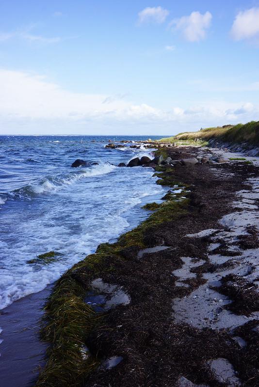 Strand-Tjoernbjerg-august-2014-02