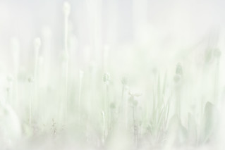 drops note 20160502 | by **sirop