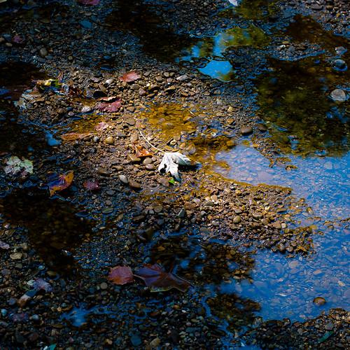 light shadow summer abstract reflection water leaves forest river square landscape puddle still woods nikon rocks quiet natural stones pebbles shore stillness kokosingriver d5000 noahbw