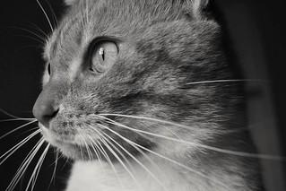 #cat #petlovers | by janfer241