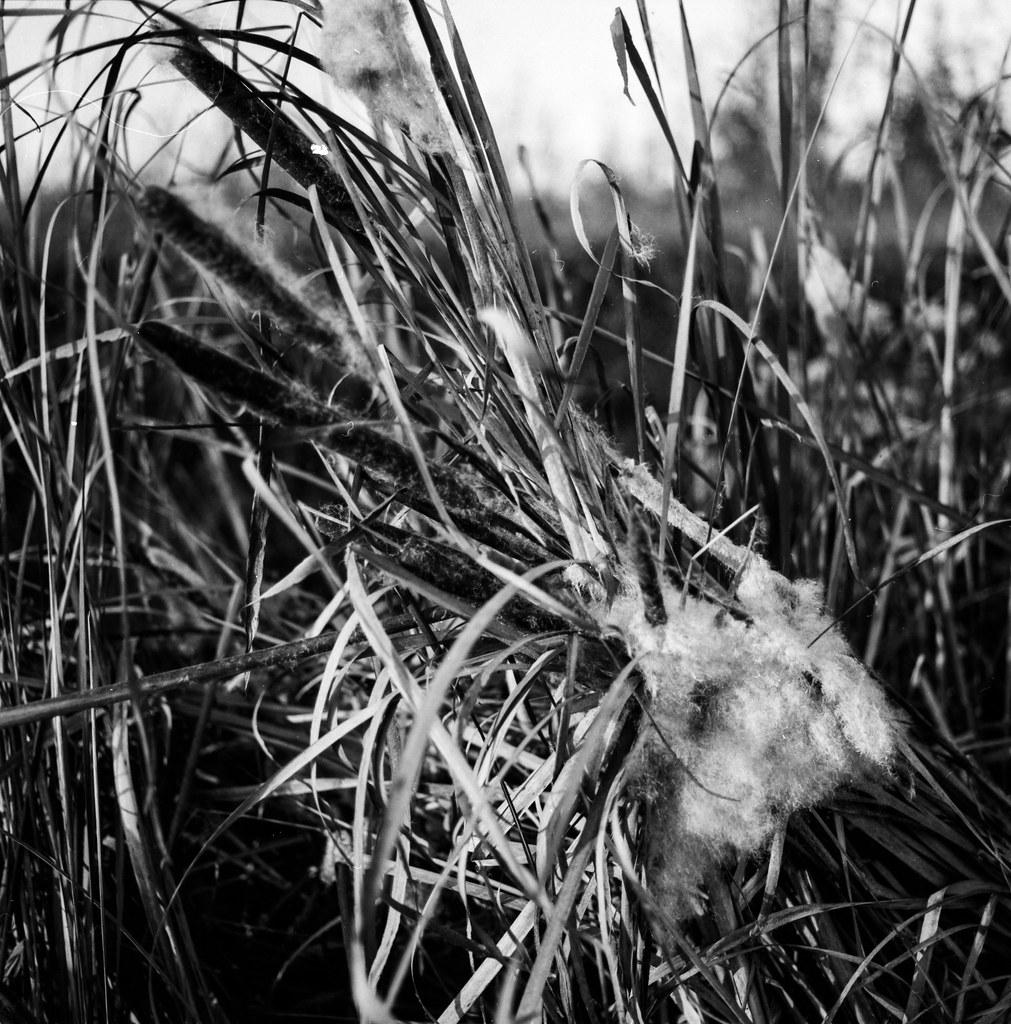 Flickriver: Photoset Hasselblad C Carl Zeiss Planar T