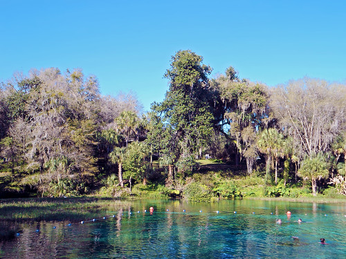 park trees water river landscape scenery florida palmtrees springs dunnellon