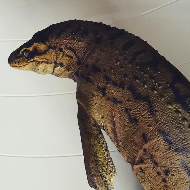 Jurassic Jaws inspection. #mosasaurus #mosasaur #seareptile #jurassicpark #jurassicworld #sideshowcollectibles #sideshowdinosauria #sideshowfreaks #sideshow #dinosaur #dinosaurs #paleontology #paleoart