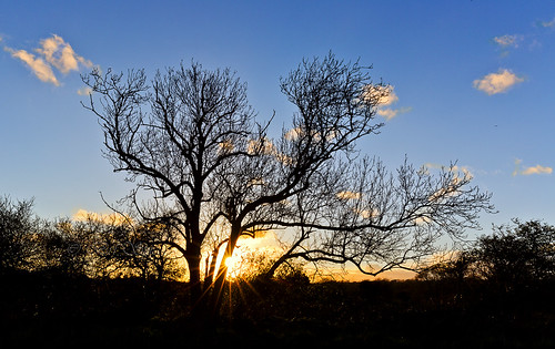 sunset cloud sussex treesilhouette worthing brianspicer canon5dmk3 canon1635f4